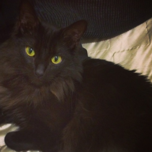 Black Cat, Mission Bay Pets, Pet Sitter, Pet Care