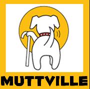 Muttville, Senior Dog Rescue, San Francisco, Mission, Mission Bay Pets, Volunteering
